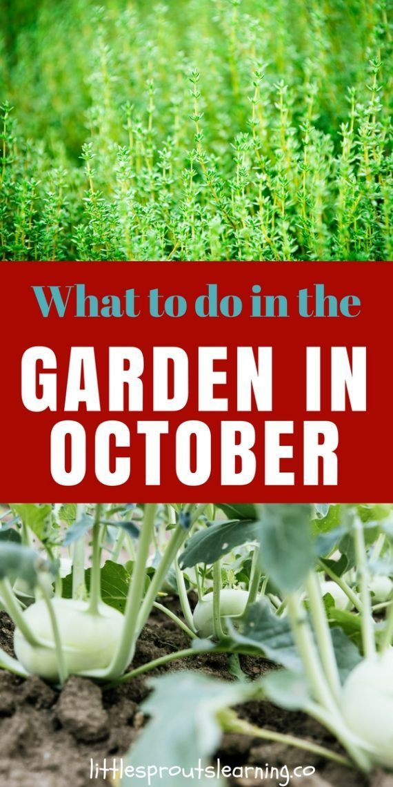 What To Do In The Garden In October Fall Vegetables Growing