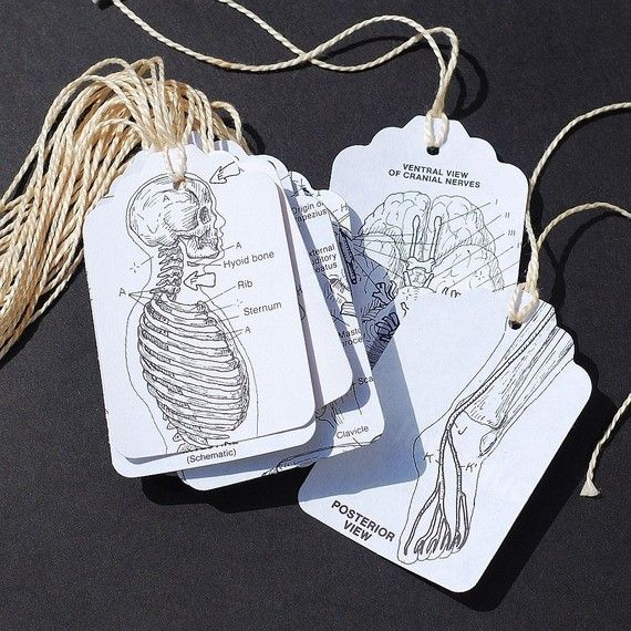 recycled gift tags- 15 human anatomy tags $5