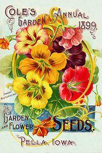 Vintage Flower Seed Packet Print Canvas