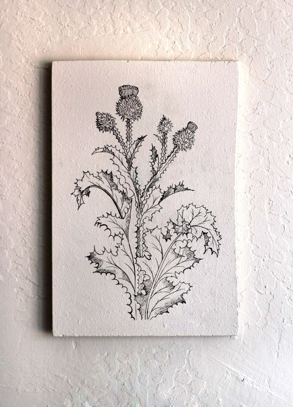 Line Drawing Coneflower : Best images about flowers line drowing on pinterest