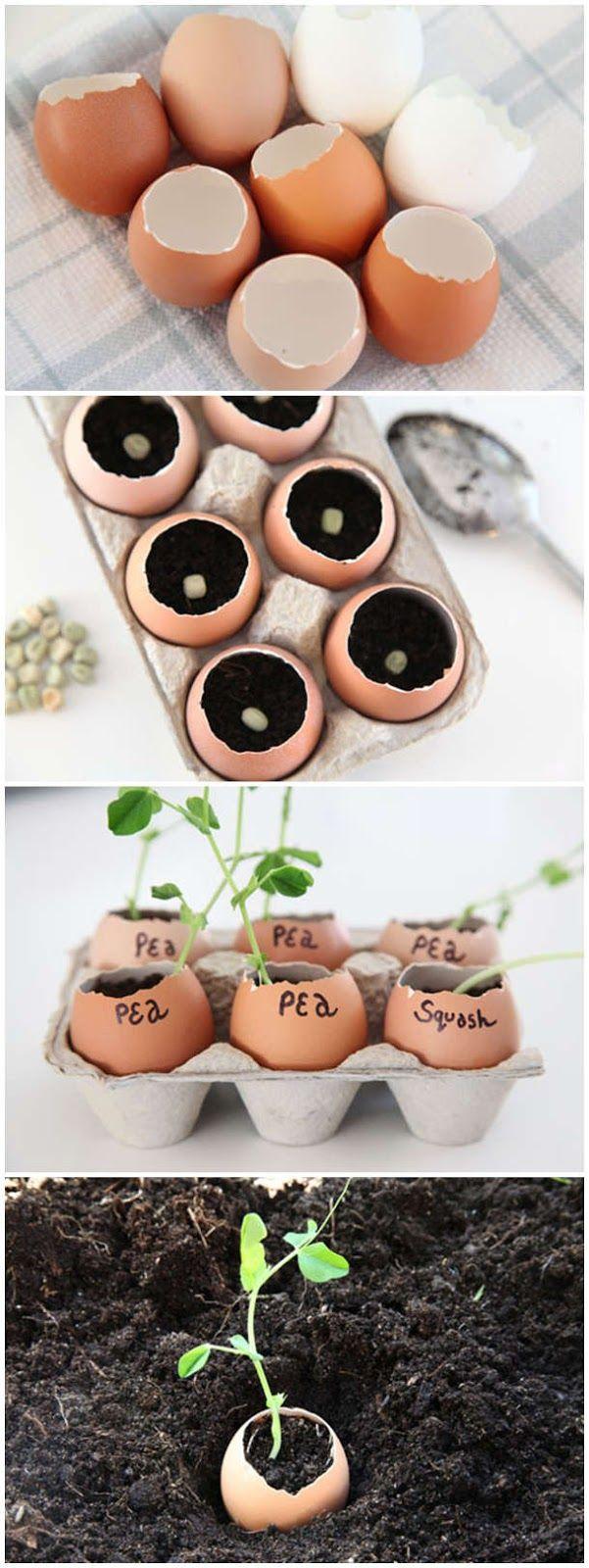 eggshell seedling pots