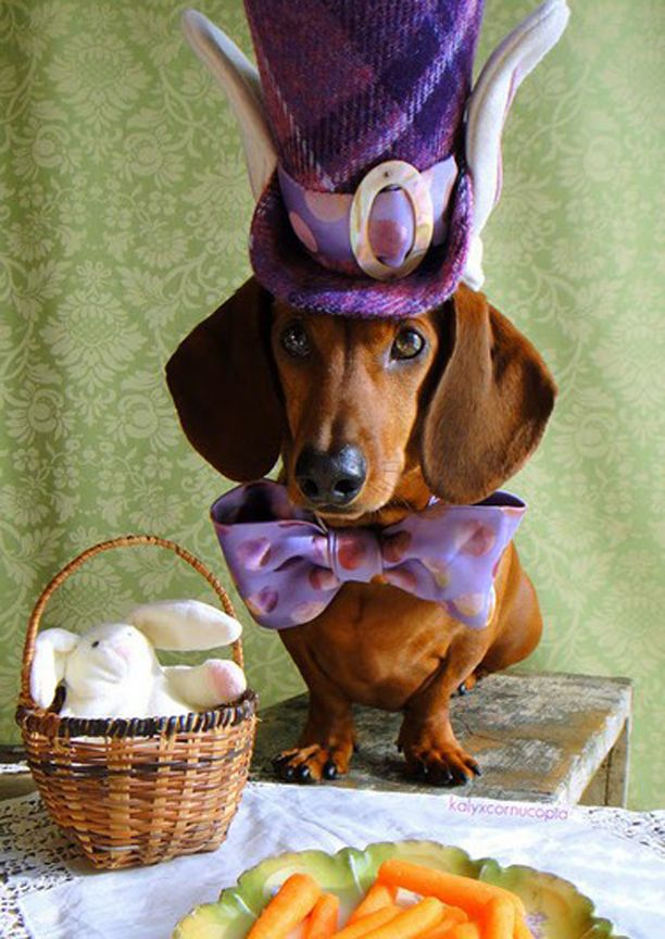 cadbury needs to get a look at this guy in his Easter bonnet