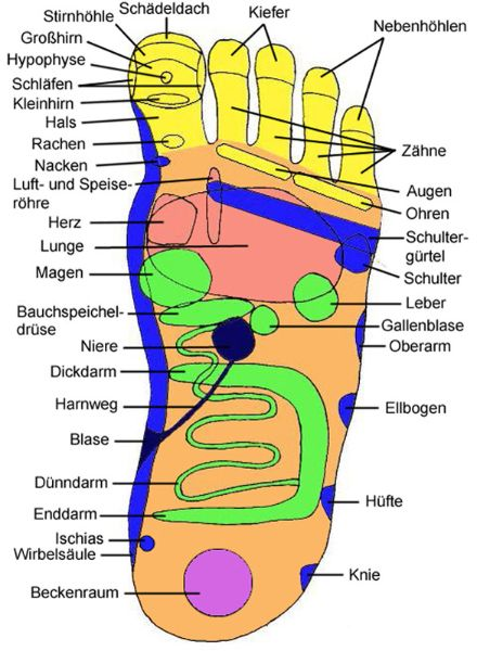 Reflexzonen Landkarte für den Fuß