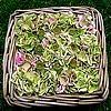 Hortensia snoeien van de bloemen voor het maken van een bloemstukje met zaaddozen van papavers