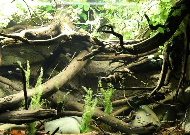 Rommer Talens South American River Biotope Biotypes From