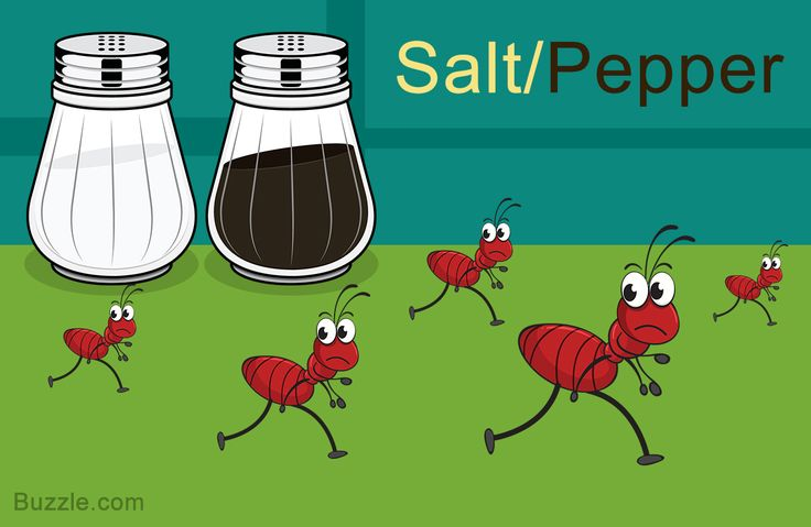Home remedies to get rid of ants salt and pepper get rid