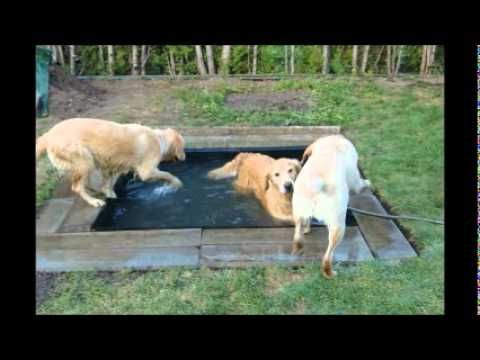 52 best dog pools images on pinterest dog cat doggie pool and dogs pool the thing about an in ground pool is that if you have an solutioingenieria Images