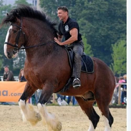 Man riding a draft horse