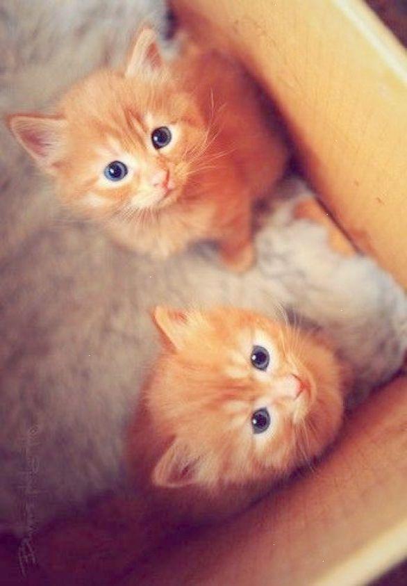 Get Some Too Cute Kittens Videos Pinterest Kittens Cutest Cute Cats Baby Animals