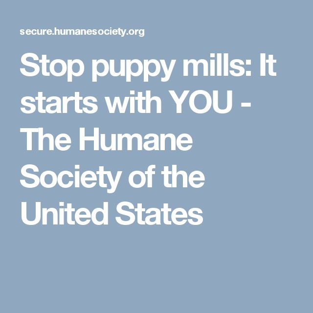 Stop puppy mills: It starts with YOU - The Humane Society of the United States