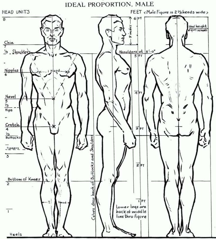 Proportions of the Human Figure : How to Draw the Male Figure in Correct Proportions