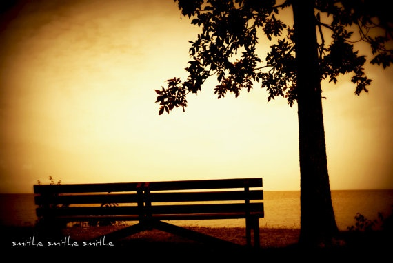 solitary bench and tree overlooking lake huron by boots2183, $8.00