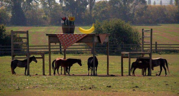 Een boer wilde een afdak bouwen voor zijn geliefde paarden. Gemeente zei: Nee! Dit deed de boer daarna..... - Zelfmaak ideetjes