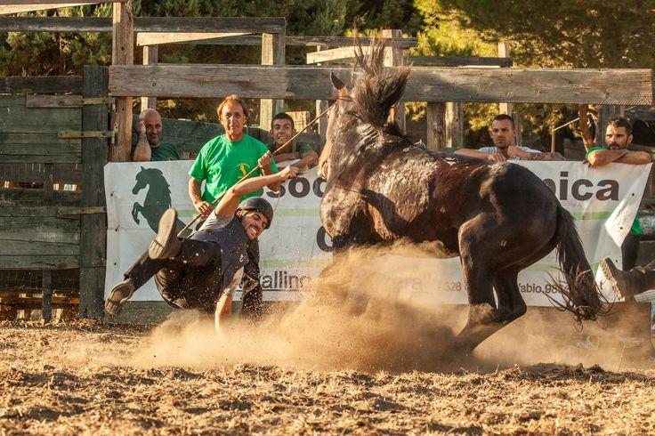 Uno spettacolo straordinario dove abili cavallerizzi si sfidano dando prova di destrezza e coraggio nel cavalcare senza sella i cavallini della Giara indomabili