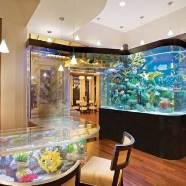 17 best images about dream fish tanks on pinterest fish for Dream of fish tank