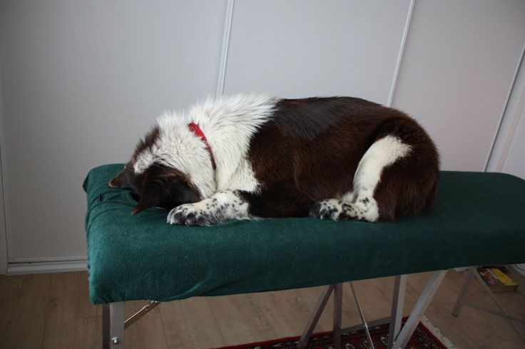 Clyde on the massage table... waiting his turn :-)