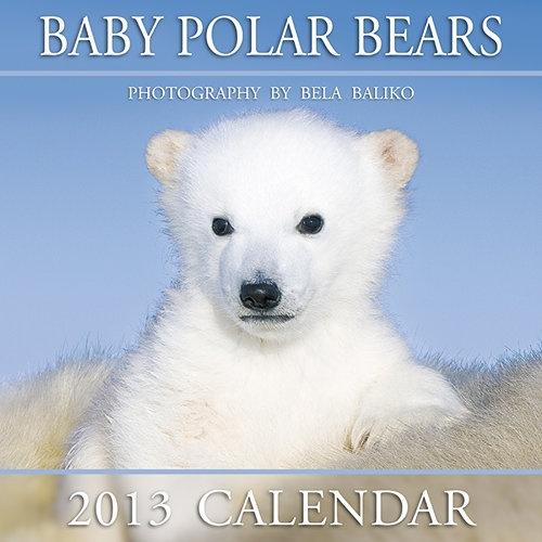 ... Polar bears! on Pinterest | Baby polar bears, Polar bear cubs and Hunt