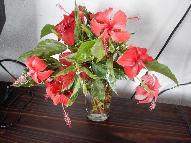 hibiscus bouquet  --  a hummingbird favorite.