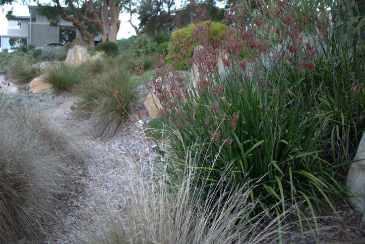 Bundeena Native Garden: Designed by Mallee Design