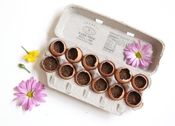 DIY: Make An Egg Crate Garden For Spring! via FreePeople