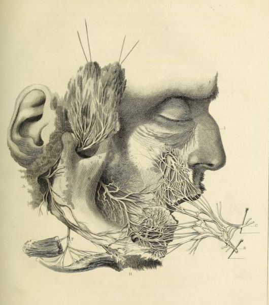 "nemfrog: ""Facial nerves. Philosophical transactions of the Royal Society of London. 1829. """