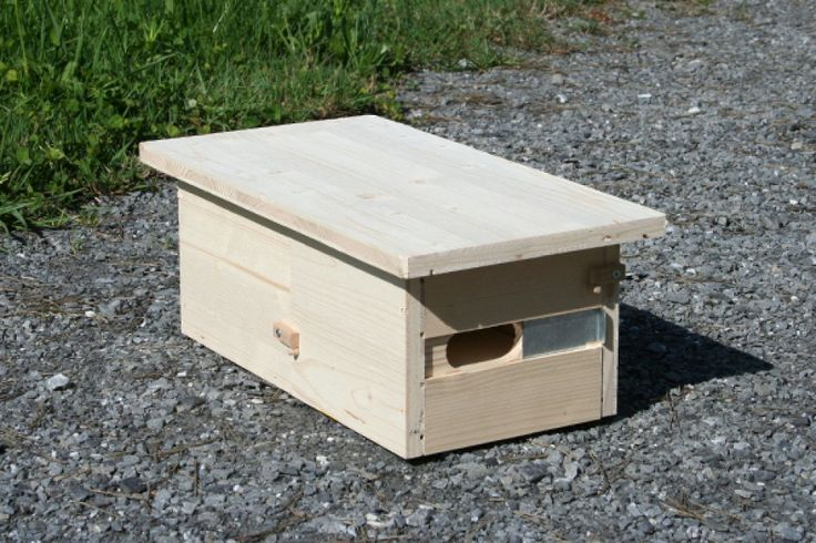 25 b sta id erna om mauersegler p pinterest oster. Black Bedroom Furniture Sets. Home Design Ideas