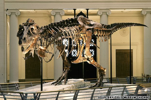 10 of the world's best dinosaur museums | CNN Travel