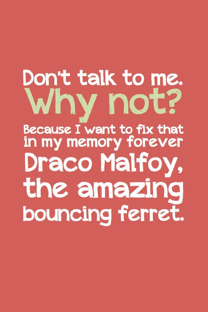 Draco the ferret