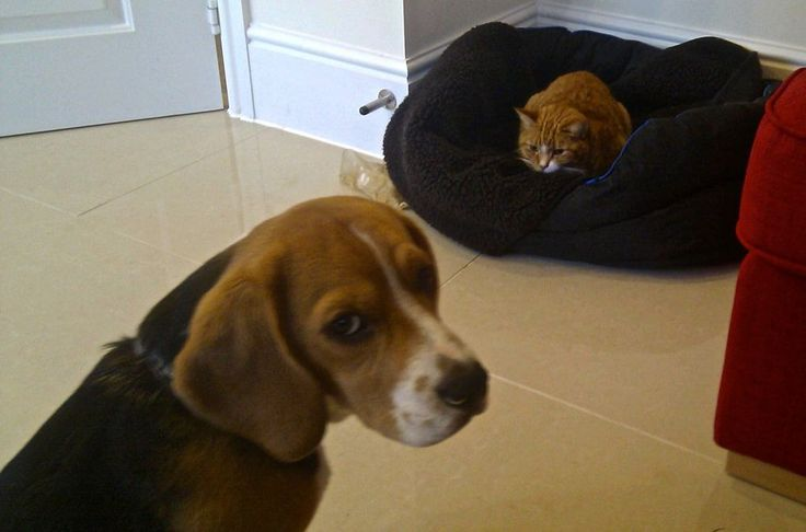 25 helpless dogs that had their bed stolen by the cat