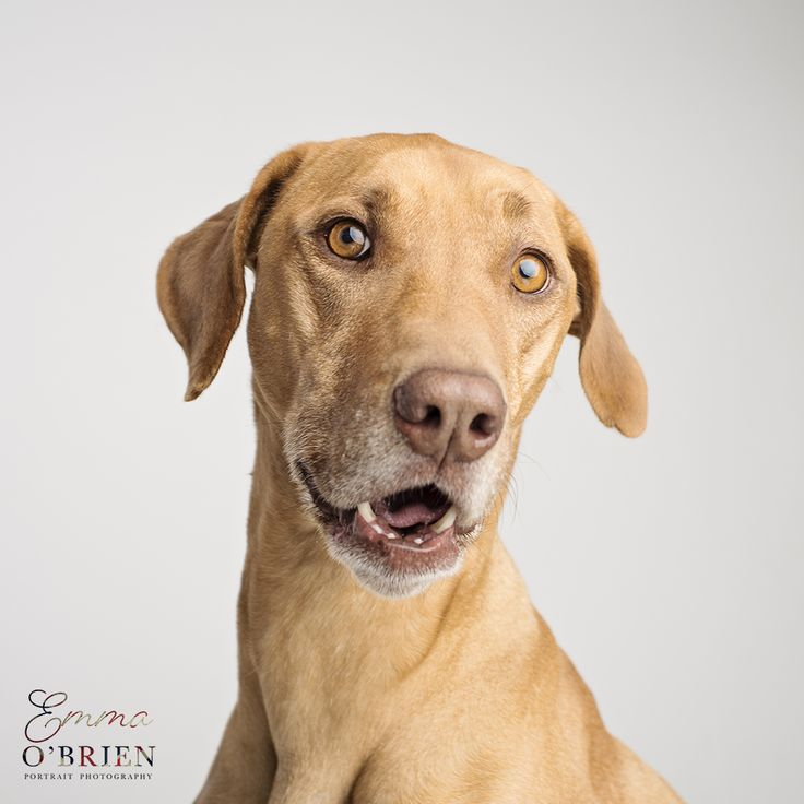 Meet the four legged team behind some of the images on the Emma O'Brien Photography Facebook and social media pages. Portraits of five dogs and a parrot.