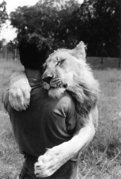 The true definition of getting a lion hug.