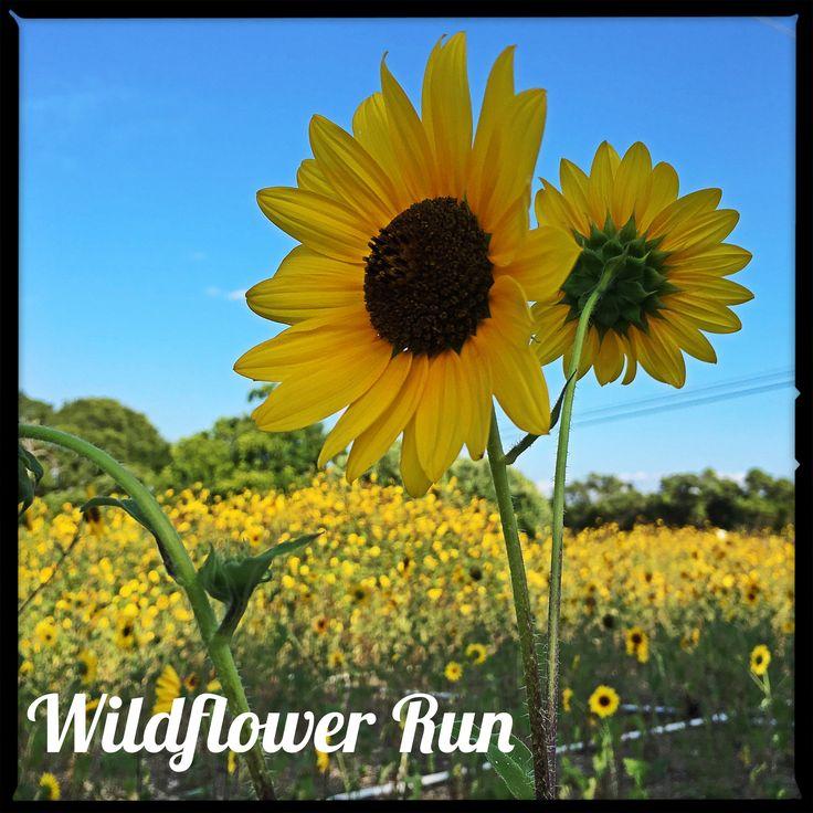 The Texas Wildflower Run is free social Run around Lady Bird Lake to spread Texas wildflower seeds (seeds provided).