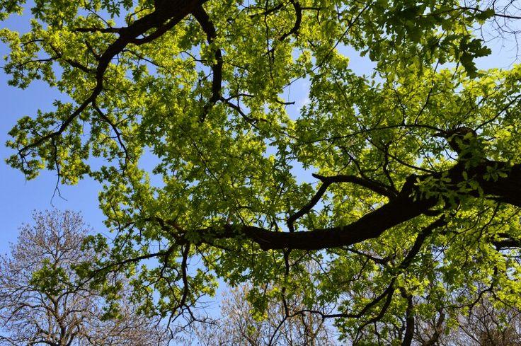 green ,beautiful tree,nature