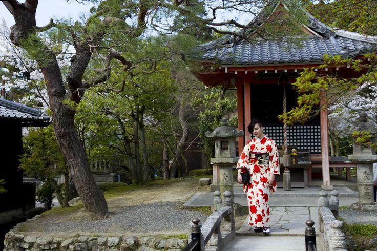 study abroad search japan kyoto