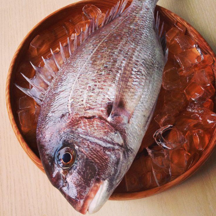143 best sushi and sashimi images on pinterest japanese for Japanese koi food
