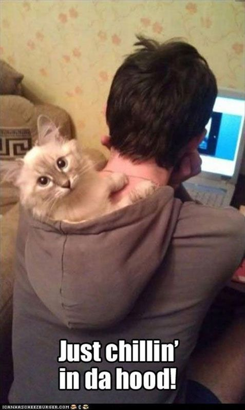Cute kitty just chillin' in da hood!!  Funny Animal Pictures With Captions