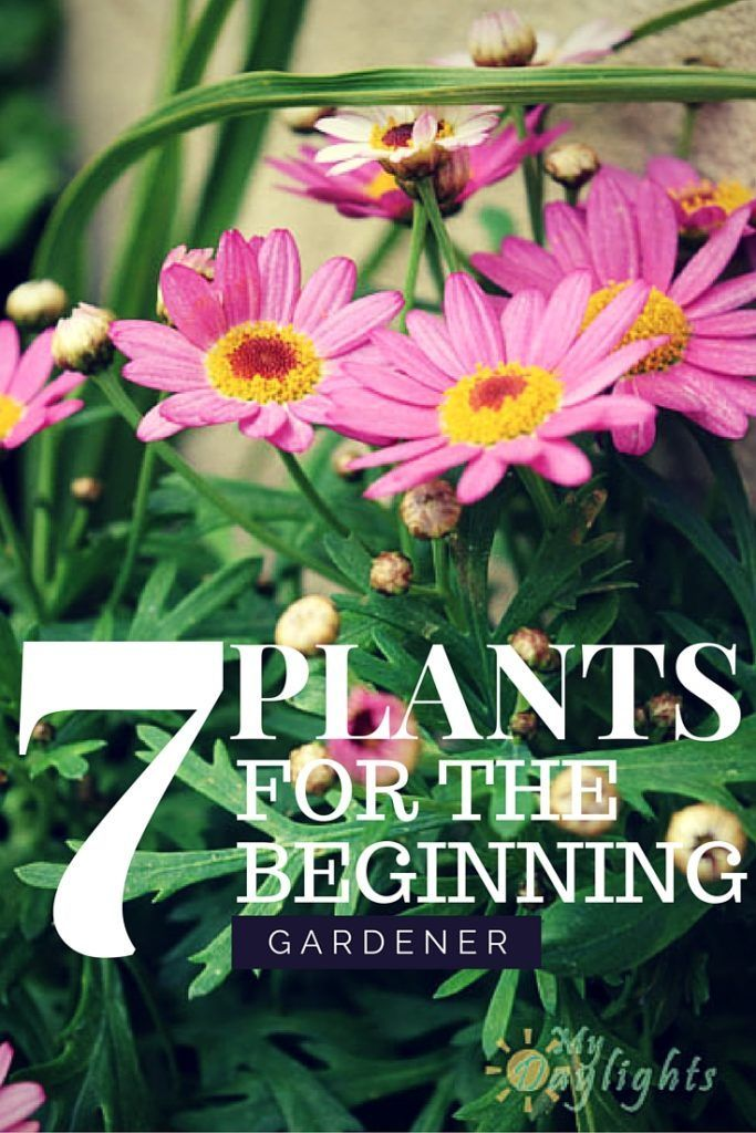 7 Best Flowers For Beginning Gardeners