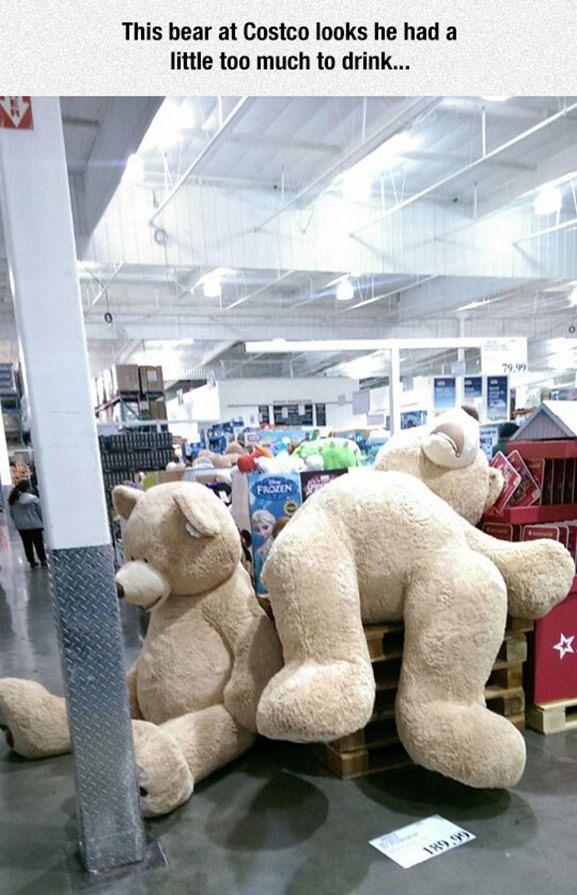 This Bear Costco Teddy Bear Costco Bear Funny