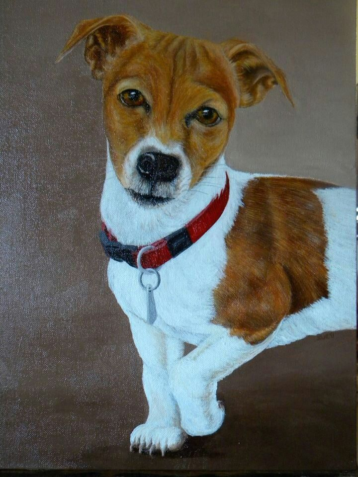Jack Russell called Amy nr 1.  450X300mm,  Acrylic on canvass.