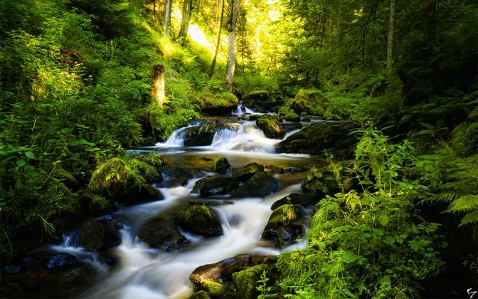 "Black Forest (""Ravenna Schlucht"") in Germany"