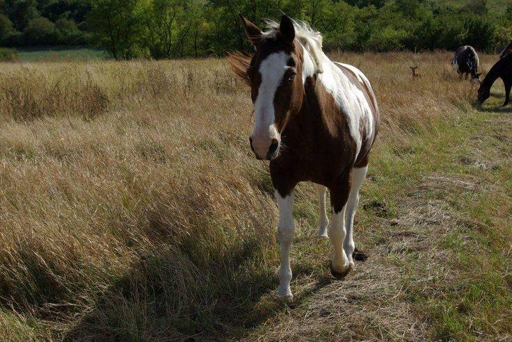 Koně a okolní pastviny