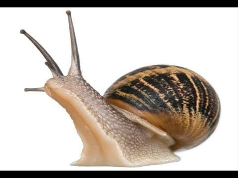 How to Care for Garden Snails - Snail Pet