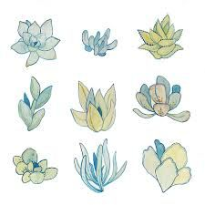 tumblr succulents drawing - Google Search