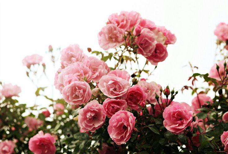 follow my tumblr: lillie-flower