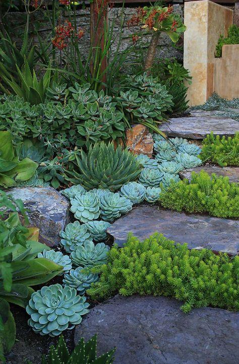 Assez Oltre 25 idee originali per Giardino di piante grasse su Pinterest  JE28