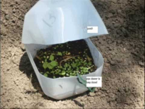 An easy to follow post on how to grow plants all winter long