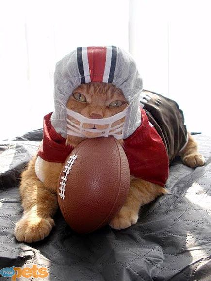 football player pet costume . ipawz.com
