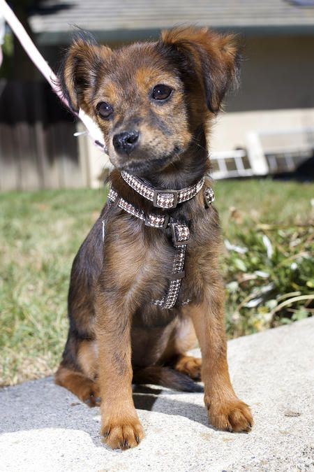 Kira the Mixed Breed