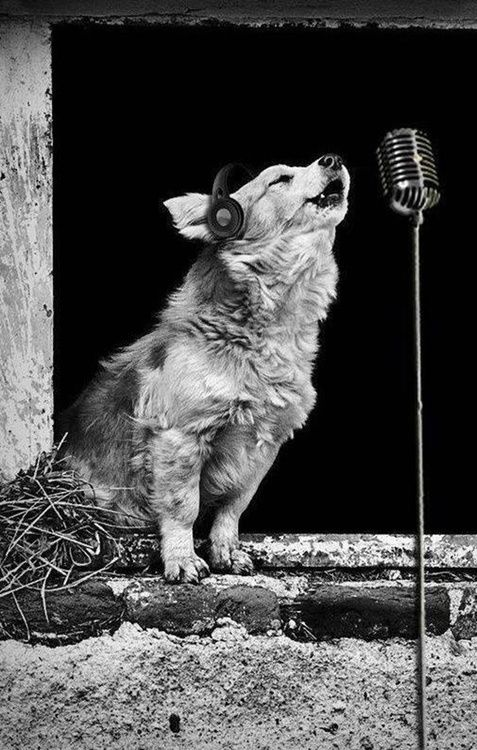 'Them' Doggone Blues. #music #headphones #microphones http://www.pinterest.com/TheHitman14/headphones-microphones-%2B/