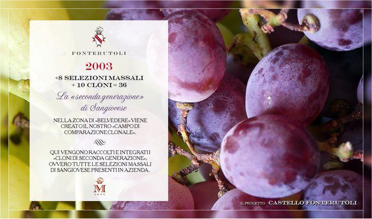 Attraverso la meticolosa attenzione alla selezione, alla mappatura ed alla sperimentazione si ottengono i migliori biotipi. @marchesimazzei #fonterutoli #marchesimazzei #wine #tuscany